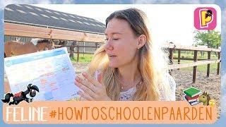 Download Hoe combineer je school en paarden? | Feline | PennyTV Video