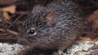 Download Health officials warn hantavirus cases tend to spike in the spring Video