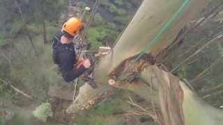 Download 70 Metre Mountain Ash Removal Video