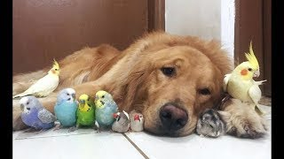 Download Cute Parrots Videos Compilation cute moment of the animals - Soo Cute! #1 Video