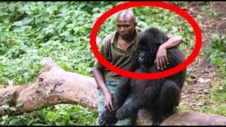 Download This Fearless Man Comforts A Gorilla Who Just Lost Her Dear Mom… Video