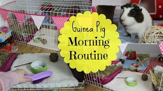 Download Guinea Pig Morning Routine - Winter | Hamster HorsesandCats Video