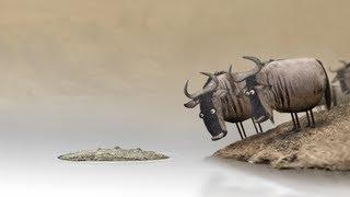 Download Wildebeest from Birdbox Studio Video