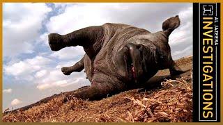 Download Al Jazeera Investigates - The Poachers Pipeline Video