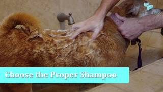 Download How to Wash a Dog of Any Size Video