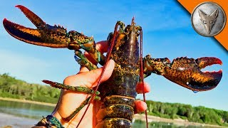 Download Saving the Lobsters! Video