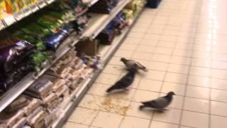Download Pigeons feeding on bird food in supermarket Video