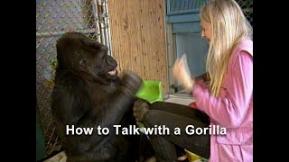 Download How to Talk with a Gorilla Video