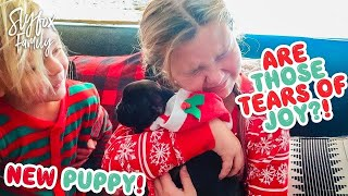 Download 🙀 CHRISTMAS PUPPY REACTIONS! 🎄🎅 BETTER THAN iPHONE! Slyfox Family X-Mas Morning | Slyfox Family Video