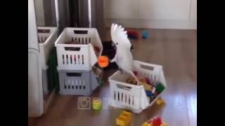 Download Funny Parrot (When u are alone at home) Video