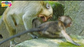 Download OMG! Why Little monkey do seriously to Lori like this?|Pity Lori baby so much|Monkey Daily 821 Video