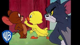 Download Tom y Jerry en Español Latino America | Lo Mejor del Pequeño Patito | WB Kids Video