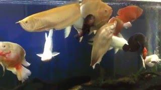 Download Monster 600 Gallon Fish Tank Feeding & Update Video