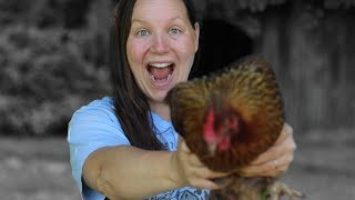 Download I Finally Found Them! - These Awesome Laying Hens! Video