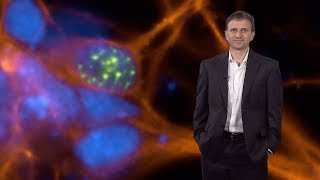 Download Bench to Bedside: Drug Discovery in Neuroscience - Ricardo Dolmetsch Video