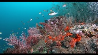Download 4K Underwater Indonesia: Marine Biodiversity (UltraHD Nature & Wildlife Stock Footage Demo Reel) Video