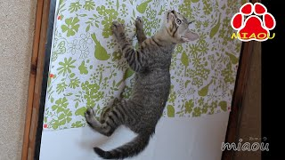 Download Kitten Leo's One Fine Day at Miaou's Cat Room Video