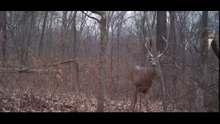 Download Hold Whitetails on a Property with Bedding Areas Video