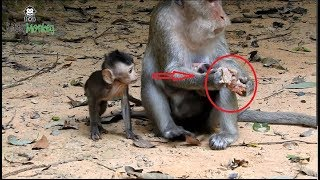 Download mother monkey so hungry she don't give baby eat food Video