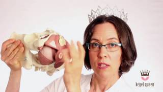 Download 6 Reasons NOT to Buy a Kegel Exercise Device - Kegel Queen Video