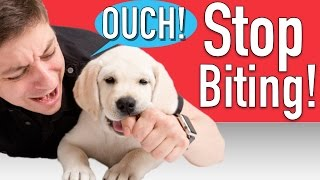 Download How to Train your Puppy to Stop Biting Video