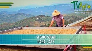 Download Proceso para el Secado Solar de Cafe- TvAgro por Juan Gonzalo Angel Video