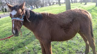 Download Abandoned neglected foal's amazing transformation as racehorse companion Video