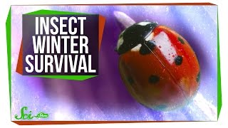 Download How Do Insects Survive the Winter? Video