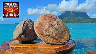 Download How to Husk and Open Coconut without Tools Video
