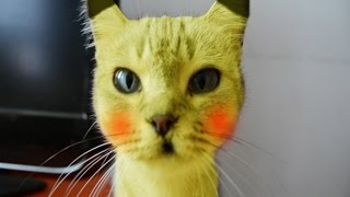 Download mi gato es un pokemon en la vida real parodia pikachu Video
