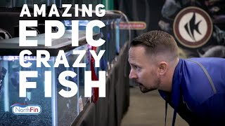 Download Northfin Fish Food Invades a Fish Show! | Jay Wilson Video