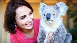 Download First time cuddling a koala and kangaroo Video