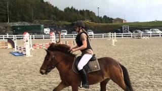 Download Jumping show with an Icelandic horse Video