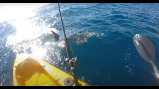 Download Kayak fisherman fights off aggresive hammerhead shark!!! (full video) Video
