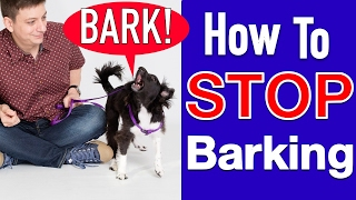 Download How to Train your Dog to STOP BARKING! Video