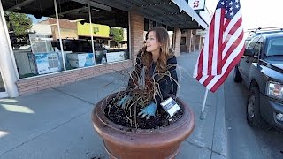 Download Planting Our Downtown Pots // Garden Answer Video