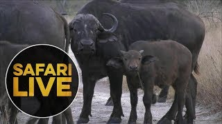 Download safariLIVE - Sunrise Safari - July 19, 2018 Video