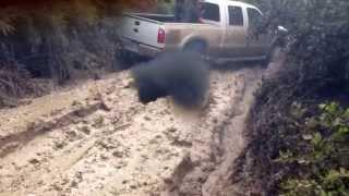 Download Big trucks mudding triple D Video