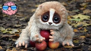 Download 10 CUTE Animals That Can KILL You Video