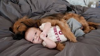 Download Funny Dogs Protecting Babies Compilation Video
