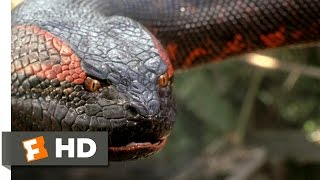Download Anaconda (8/8) Movie CLIP - Swallowed Whole (1997) HD Video