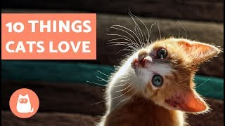 Download 10 Things Cats Love Video