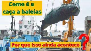Download O Japão voltou a capturar baleias. Mas na verdade, ele e outros países nunca pararam de fazer isso! Video