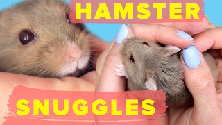 Download How To Teach Your Hamster To Snuggle Video