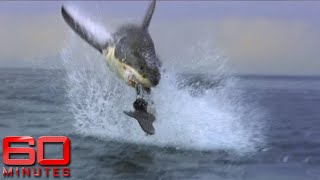 Download 60 Minutes Australia: Shark Shield Video