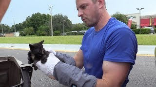 Download Tiny Tortie Kitten Rescued from Underneath Car! Video