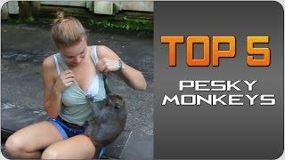 Download #Top5 Pesky Monkeys | JukinVideo Top Five Video
