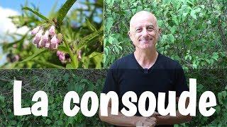 Download La consoude Video