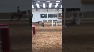 Download Superb 16.3hh Full RID for sale Video