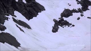 Download Possible Sasquatch Sighting outside Squamish, BC Video